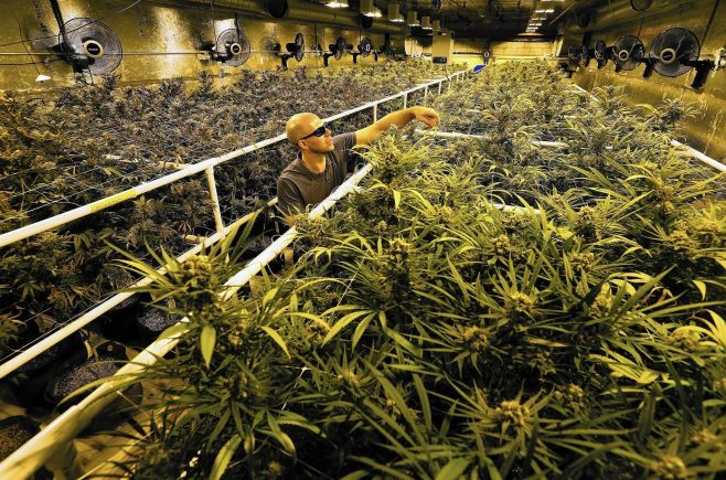 Canada Marijuana Boom